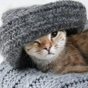Cat Warm Woollen Scarf Wedding Anniversary Gift