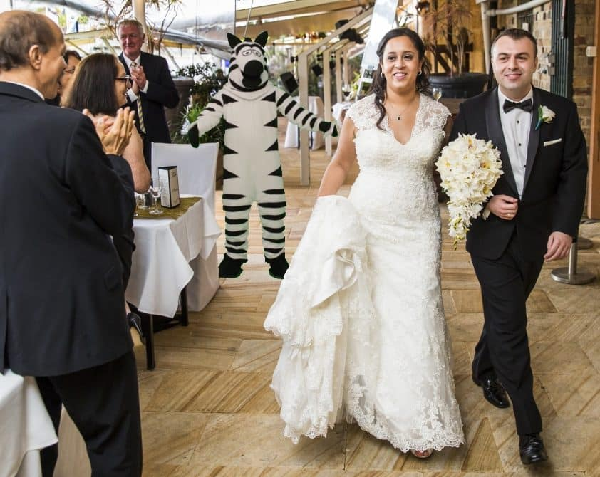 Furry Wedding Planner: Bridal Couple Entrance Zebra John Oliver Last Week Tonight