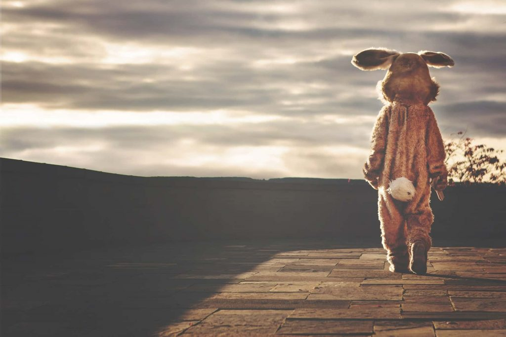 Furry Wedding Planner: Single rabbit looking into the sunset