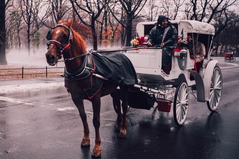 Types Of Wedding Transport: Horse & Carriage
