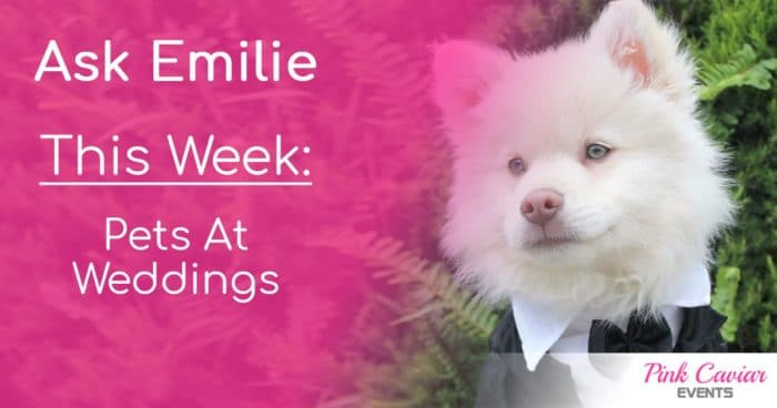 Ask Emilie Thumbnail Social Media Pets At Weddings Wedding Planner Advice Blog